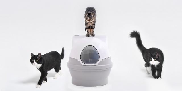 享受陪伴時光 | CatGenie貓潔易全自動貓廁所,貓咪的最愛!