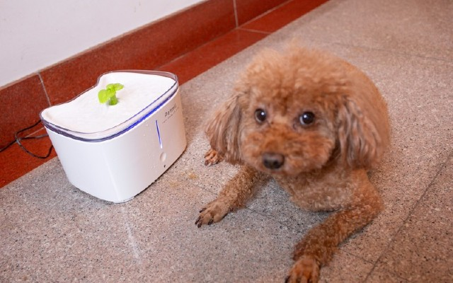 宠物健康,从水源头做起!体验Petmii智能宠物饮水机