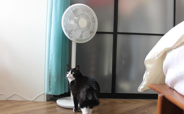 炎热夏天,动动嘴就能续命,米家直流变频落地扇体验