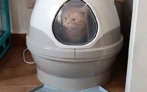 CatGenie猫洁易至尊款使用心得