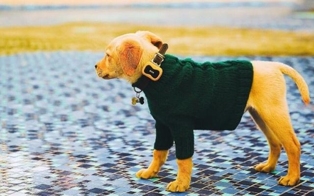 狗狗身上的移动GPS,还能在狗界晒朋友圈 — 宠米遛遛定位器体验 | 视频