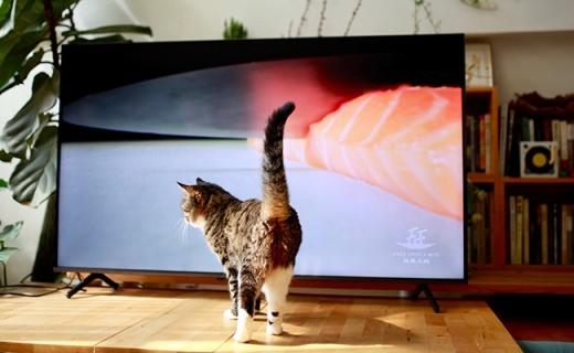 打開榮耀智慧屏X1享受家庭影院:擼貓飲茶,紡線織布,日日如常