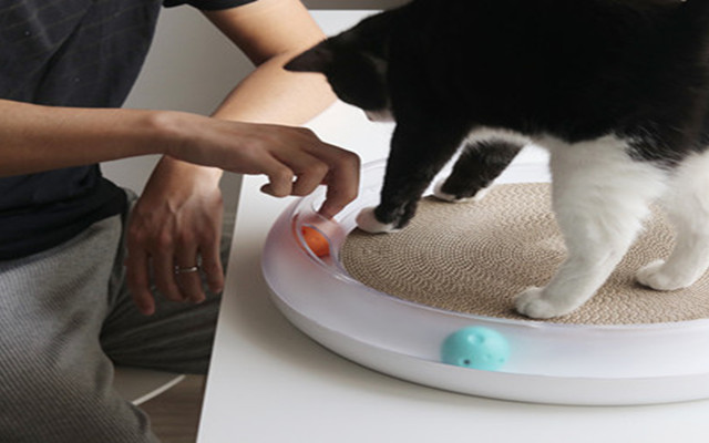 小佩貓抓板體驗:嗨翻喵星人的多功能游樂場
