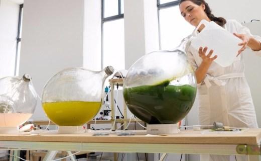 用藻类植物3D打印生活用品,合成塑料要被淘汰了?