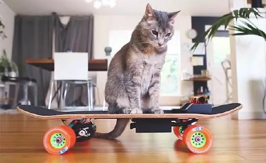老外為愛貓打造專屬電動滑板,喵星人又有新玩具!