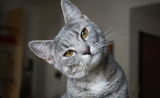 年轻人的第一只机器猫诞生!造型蠢萌,骚年吸吗?