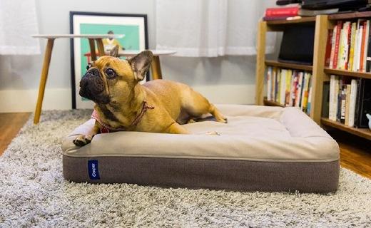 人不如狗系列:狗狗專用記憶床墊,舒適又耐用