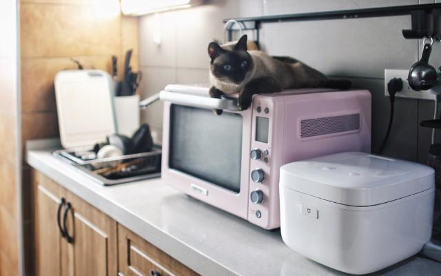 是偶像派也是实力派,解锁厨房还需这三样,烤箱、厨房垃圾处理器