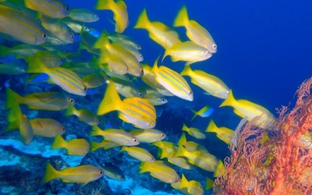 帶著神器逛逛海底世界,讓你成為海王夢回亞特蘭蒂斯——泰鼎水中飛行器