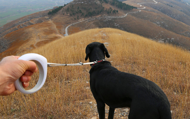 自帶手電的智能遛狗繩,科學遛狗更輕松 — 小佩Petkit智能牽引繩體驗 | 視頻
