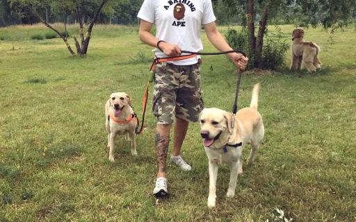 遛狗也能不用手?有了這條牽引繩一人從容遛三狗