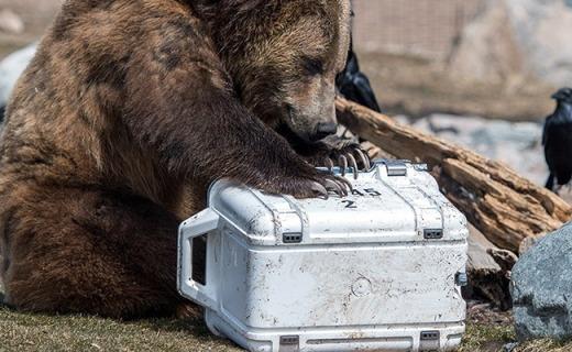 史上最強保溫箱,保冷14天棕熊遇上也無可奈何!