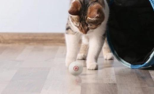 自動逗貓狗,內置算法智能啟停,寵物獨居神器眾籌中
