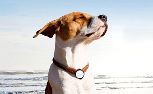 Petkit宠物智能牌挂件:7天7夜全时记录,可提供喂食建议心情感知