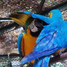 長焦到底有沒有用,帶著榮耀30行攝動物園,原來拍動物這么簡單