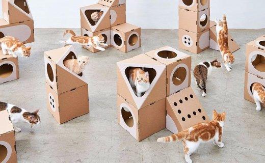 過年你家貓怎么辦?這個環保貓公寓可以一試