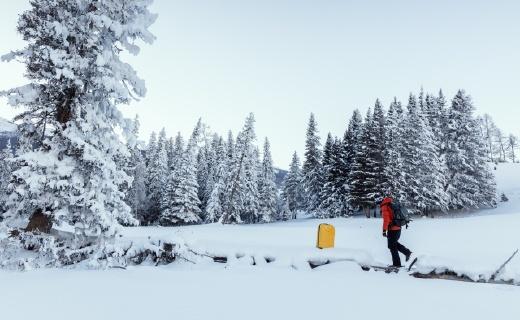 在极寒30度的仙境世界,一只行走的旅行箱火了!