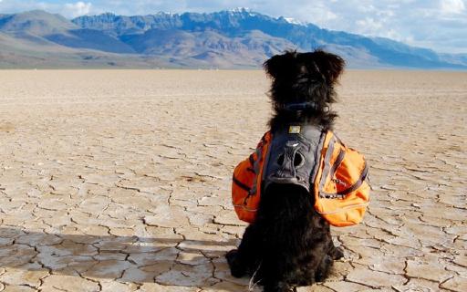 狗狗专用背包,让你出行更轻便