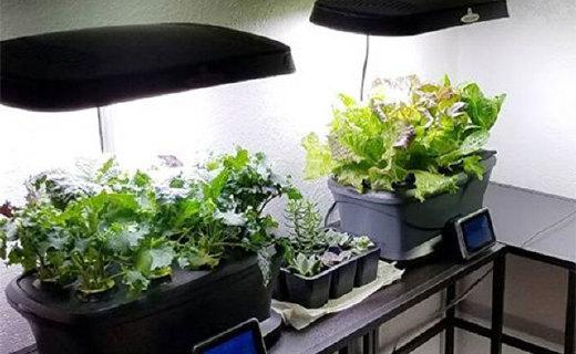 一张桌子打造自己的花园,室内花园智能种植套装满足你的花匠梦