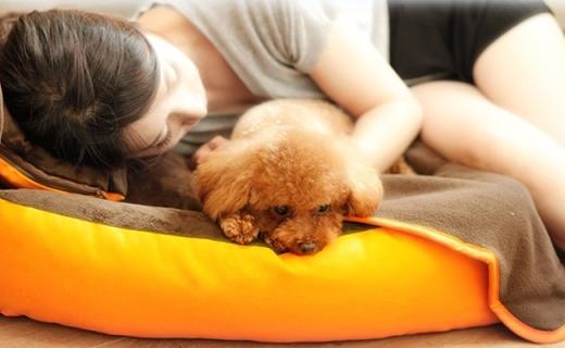 hoopet四季寵物窩:可拆洗設計防蟲防螨,橙色外表更活潑