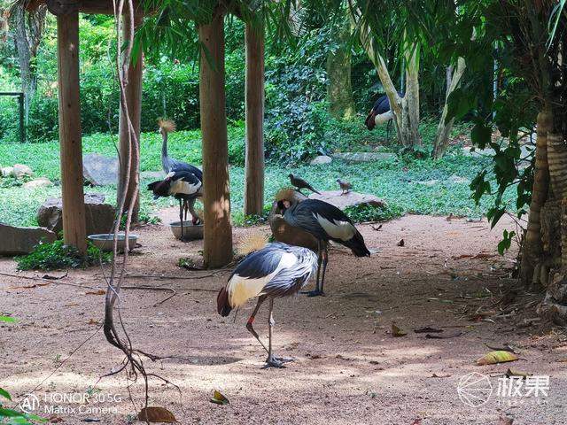 长焦下感受动物世界的纯粹与安宁荣耀30旅拍体验