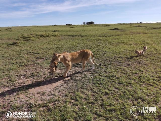用荣耀20PRO全程记录:和雄狮象群成为朋友,于淳朴至简中感受生命的纯真