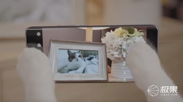 「此视频甜度超标」恋爱这件事,看喵星人是如何秀出花样的?