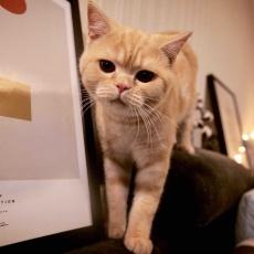 貓小白不白