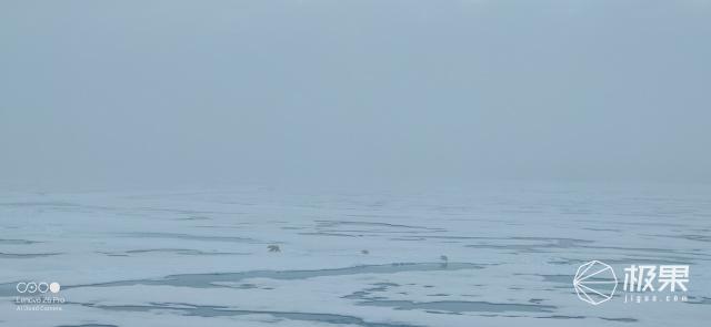 冰泳?BBQ?撩北極熊?北極點硬核打卡竟然這么玩…