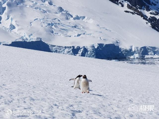 性能神机vs狂野南极?极地求生竟然被搞成最虐心的终极修行