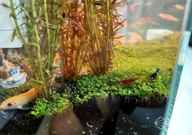 哪种鱼缸更适合养鱼?画法几何AI智能鱼缸,水质监测+自动喂食